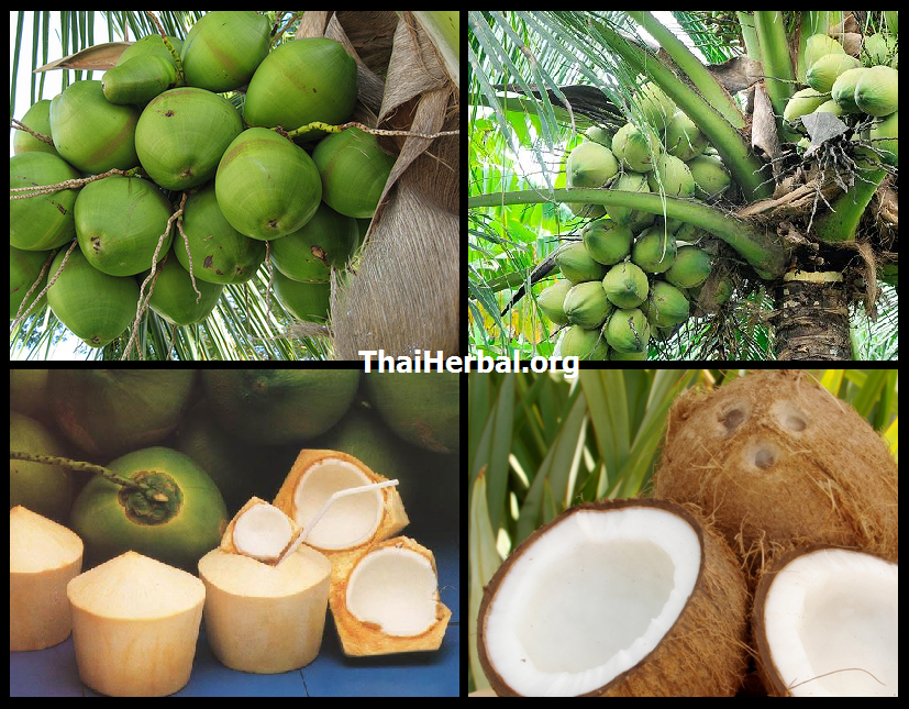 CoconutHerb1